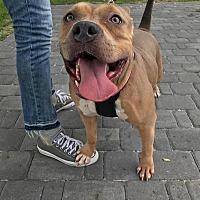 Adopt A Pet :: Freedom - Greensboro, NC