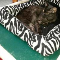 Adopt A Pet :: Ming Lee - Brooksville, FL
