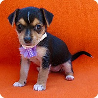 Adopt A Pet :: Jan - Irvine, CA