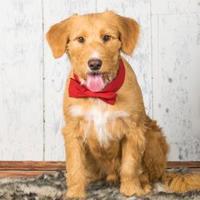 Adopt A Pet :: Roy - Santa Fe, TX
