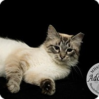 Adopt A Pet :: Sammi - Lake City, MI