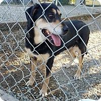 Adopt A Pet :: CHRISSY - Emmett, ID