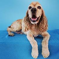 Adopt A Pet :: Crosby - La Mirada, CA