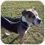Photo 2 - American Bulldog Mix Dog for adoption in Barron, Wisconsin - Kizzy