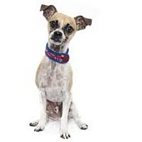 Adopt A Pet :: Chief - Sacramento, CA
