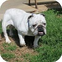 Adopt A Pet :: Maude - Winder, GA