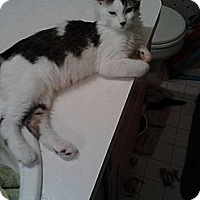 Adopt A Pet :: Eroz handsome - Sterling Hgts, MI