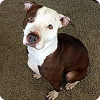Adopt A Pet :: Mallory - Evansville, IN