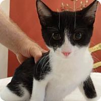 Adopt A Pet :: Benjamin - Colmar, PA
