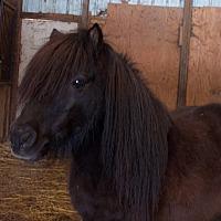 Adopt A Pet :: Jude - Dewey, IL