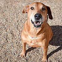 Adopt A Pet :: Zeus - Lubbock, TX