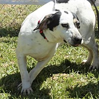 Adopt A Pet :: Dominoe - Grayson, LA