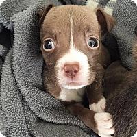 Adopt A Pet :: Finn - Mission Viejo, CA