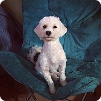 Adopt A Pet :: Brandon - Davie, FL