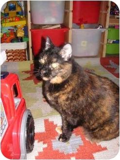 Domestic Shorthair Cat for adoption in Yorba Linda, California - Bailey