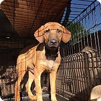 Adopt A Pet :: Marley - Smithtown, NY