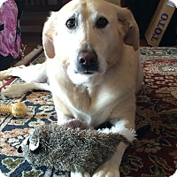 Adopt A Pet :: Sally (COURTESY POST) - Baltimore, MD
