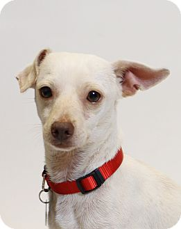 Mixed Breed (Small) Mix Dog for adoption in Truckee, California - De Niro