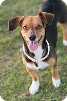 Beagle Mix Dog for adoption in Santa Fe, Texas - Milly