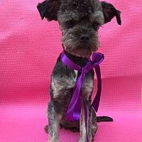 Adopt A Pet :: Hope - El Cajon, CA