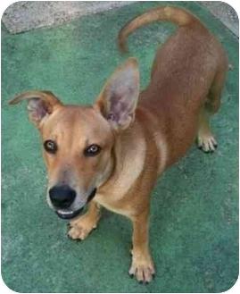 Labrador Retriever Mix Dog for adoption in Haughton, Louisiana - Tucker