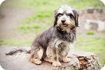 Terrier (Unknown Type, Small) Mix Dog for adoption in Jersey City, New Jersey - Lester Holt