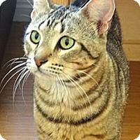 Adopt A Pet :: Tuukka - Escondido, CA