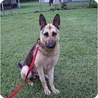 Adopt A Pet :: Toby - Green Cove Springs, FL