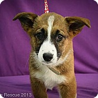 Adopt A Pet :: Glacier - Broomfield, CO