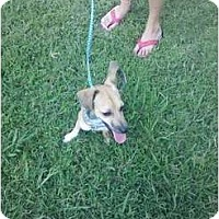 Adopt A Pet :: B.G. - Murfreesboro, TN