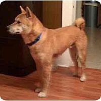 Adopt A Pet :: Baron (Illinois) - Round Lake, IL