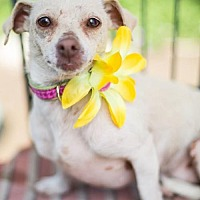 Terrier (Unknown Type, Medium) Mix Dog for adoption in Fresno, California - Sunkist