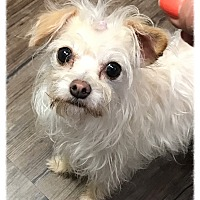 Adopt A Pet :: Fiji AKA Koko - Los Alamitos, CA