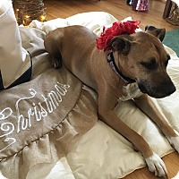 Adopt A Pet :: Ava (COURTESY POST) - Baltimore, MD