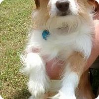 Adopt A Pet :: Woody - Harrisonburg, VA