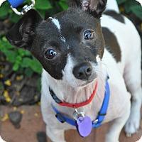 Adopt A Pet :: Piper - Atlanta, GA
