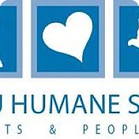 Adopt A Pet :: PUNKIN - Fernandina Beach, FL