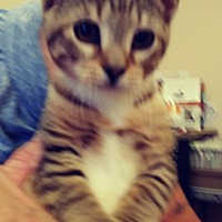 Adopt A Pet :: Kissy - Trevose, PA