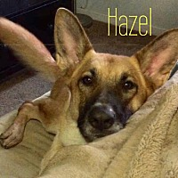 Adopt A Pet :: Hazel - Martinez, CA