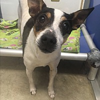 Adopt A Pet :: Buddy - Nashville, TN