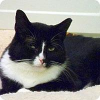 Adopt A Pet :: Jasmine - Huntington, NY