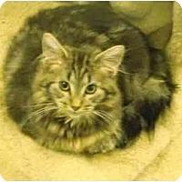 Adopt A Pet :: Little Belle - Mission, BC