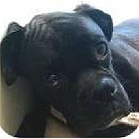 Adopt A Pet :: Jax - North Haven, CT