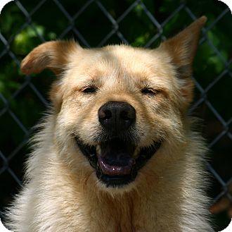 Pointer Mix Dog for adoption in Pinehurst, North Carolina - Francine