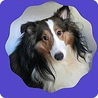 Adopt A Pet :: Teegan - Circle Pines, MN