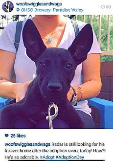 German Shepherd Dog Mix Puppy for adoption in Scottsdale, Arizona - Radar