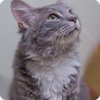 Adopt A Pet :: Zach - Merrifield, VA