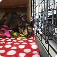 Adopt A Pet :: Tori - Baltimore, MD