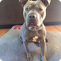 Adopt A Pet :: Ernie - Marietta, GA