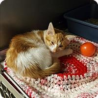 Adopt A Pet :: Spunky - Middletown, NY